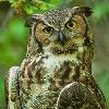 isfoss86's avatar