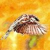 ISG-Art's avatar