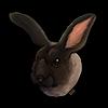 isoldehn's avatar