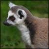 ItsaWildMaki's avatar