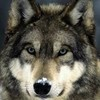 ivanhoe66's avatar