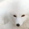 Ivaqui's avatar