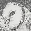 IvoryDraco's avatar