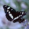 Izida's avatar