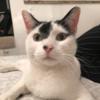 Izzco's avatar