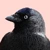 jack-davv's avatar