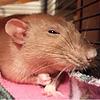 JacksonA3's avatar