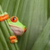 jacobware's avatar