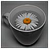 jadvice's avatar
