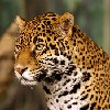 Jaguar7800's avatar