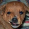 javapitts's avatar