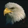 jaylun's avatar