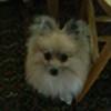 JayzPF's avatar