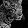 jellydolphine's avatar