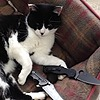 jellymurdercat's avatar