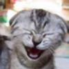 jellywad's avatar