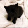 jentwar's avatar