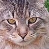 jessicadr06's avatar