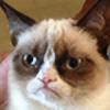 Jewel-kits's avatar