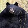 JimboBanana's avatar