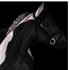 JKoenegge's avatar
