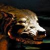 jlente's avatar