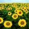 JMaySunflower's avatar