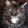 JodyTorres's avatar