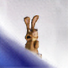 joelee88's avatar