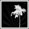 johnnyj3's avatar
