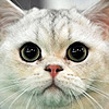 jonetone66's avatar