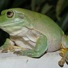 joshuaJenri's avatar