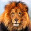 JrLion's avatar