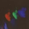 jufrezza's avatar