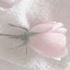 jungoily's avatar