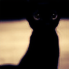 Junkmail-user's avatar