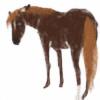 just-sora's avatar