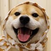 Juuko-Chan's avatar