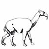 k0pter's avatar