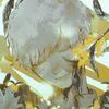 Kaikuma's avatar