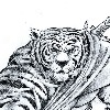 Kameha20's avatar