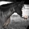 KamMarieS's avatar