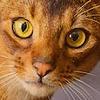 KanaGo's avatar