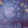 karenpa's avatar