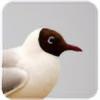 KariLokki's avatar