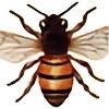 Karlisle-Nelipot's avatar