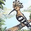 KarolDalaiSarash's avatar