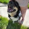 Karugari's avatar