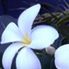 kasavarajusketch's avatar