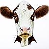 Kaskad93's avatar